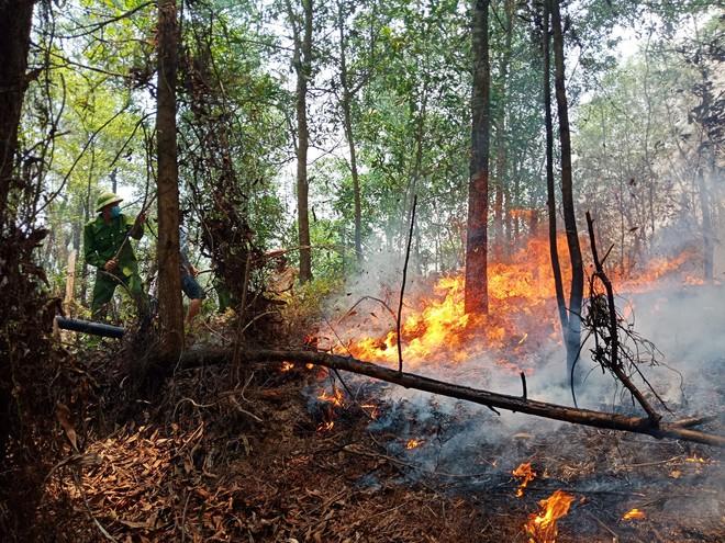 Toàn cảnh vụ cháy rừng thông trong đêm, lực lượng chức năng trắng đêm canh rừng - Ảnh 1.
