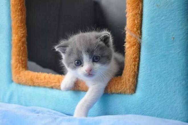 Trung Quốc công bố nhân bản thành công mèo cho mục đích thương mại - Ảnh 1.