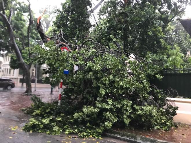 Ảnh hưởng của bão số 3, Hà Nội ngập nhiều tuyến phố, cây xanh gãy cành, bật gốc - Ảnh 4.