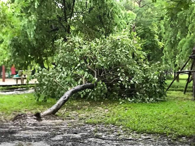 Ảnh hưởng của bão số 3, Hà Nội ngập nhiều tuyến phố, cây xanh gãy cành, bật gốc - Ảnh 6.