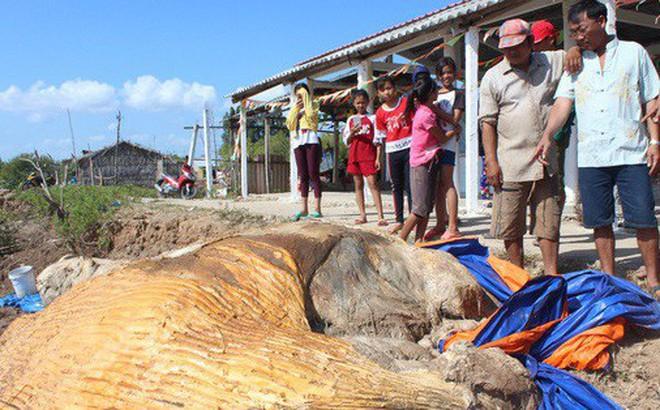 """Dân kéo đến xem xác cá voi """"khủng"""" trôi vào bờ, đang phân hủy nặng"""