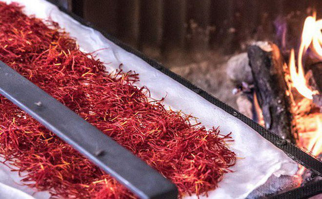 Saffron không tự nhiên mà đắt, cách người ta sản xuất ra nó cầu kì đến thế này cơ mà