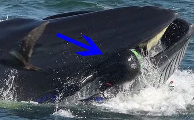 Pinocchio đời thực: Hành trình lọt vào bụng cá voi rồi thoát ra an toàn của nhiếp ảnh gia Nam Phi