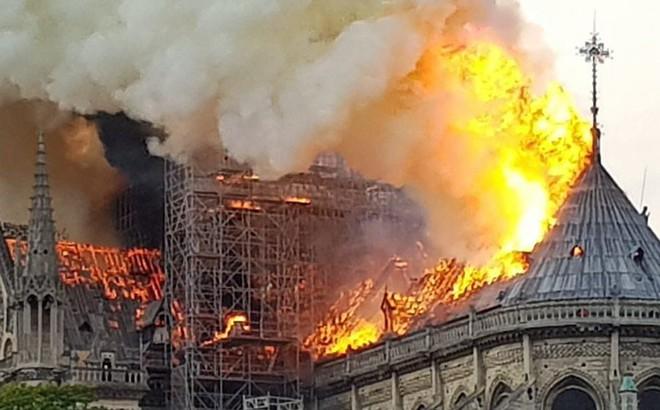 Pháp có thể phải nhập khẩu gỗ để làm lại mái Nhà thờ Đức Bà