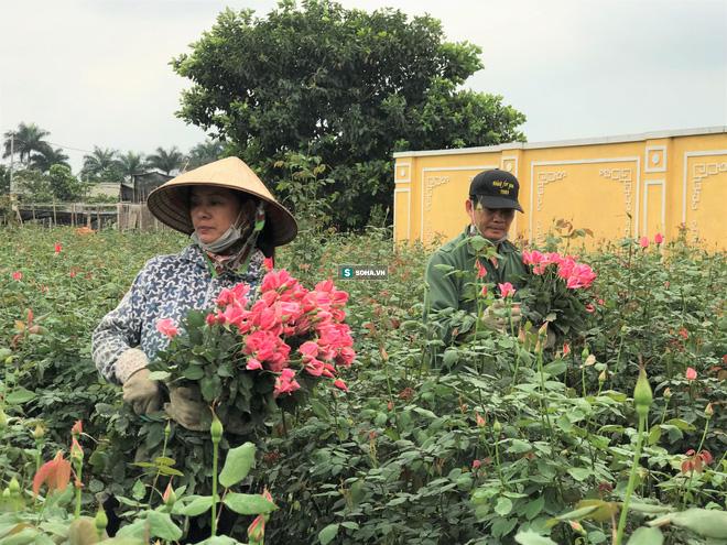 """Làng hoa lớn nhất Hà Nội ủ rũ vì Covid-19: """"Chắc phải bán đất để bù lỗ - Ảnh 5."""