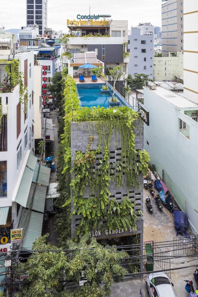 Vườn treo tại Đà Nẵng được cải tạo từ căn nhà xây dang dở xuất hiện long lanh trên báo Mỹ - Ảnh 3.