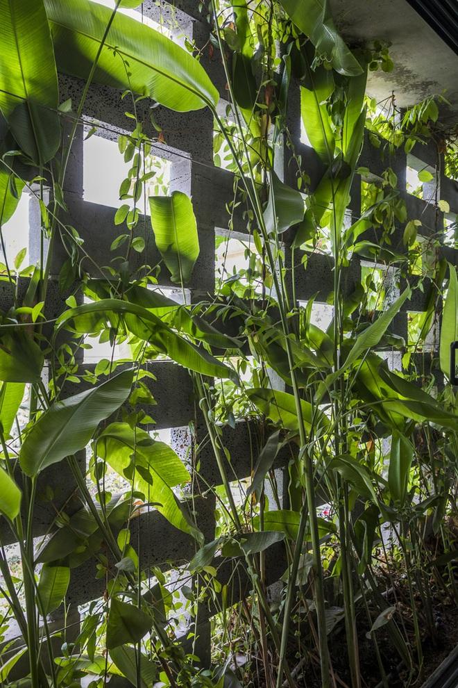 Vườn treo tại Đà Nẵng được cải tạo từ căn nhà xây dang dở xuất hiện long lanh trên báo Mỹ - Ảnh 9.