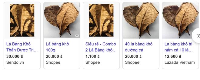 Chuyện thật như đùa, lá bàng khô được rao bán rầm rộ với giá đắt hơn cả cốc cà phê  - Ảnh 1.