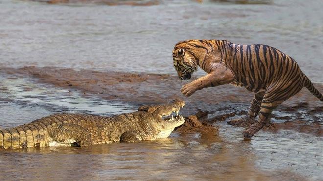 Câu chuyện thú vị từ chúa sơn lâm: Với hổ đực, vợ con là trên hết! - Ảnh 3.