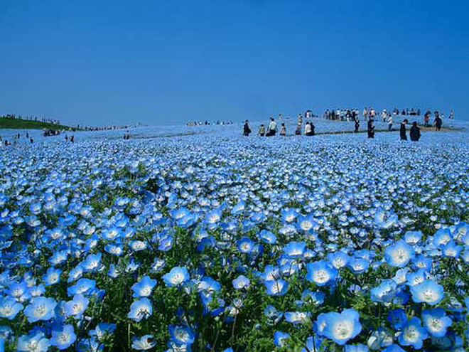 Chiêm ngưỡng những cánh đồng hoa đẹp nhất thế giới