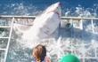 24h qua ảnh: Kinh hoàng cá mập đói chui vào lồng đòi mạng thợ lặn