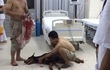 Chú chó bị đâm vào cổ ở phố Nguyễn Chí Thanh (Hà Nội) đã chết