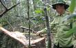 Công bố kết quả điều tra vụ phá rừng Pơmu Quảng Nam: Còn 11 đối tượng bỏ trốn, chưa phát hiện bảo kê