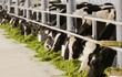 40 năm, sữa Vinamilk xuất đi 43 nước