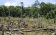 Kỷ luật hàng loạt cán bộ để mất rừng