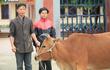 [ẢNH] Bà con hồ hởi nhận bò, lợn giống từ chương trình từ thiện của Báo Trí Thức Trẻ