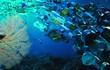 Cỗ máy mới có thể dọn sạch 1 nửa đảo rác lớn nhất Thái Bình Dương chỉ sau 5 năm