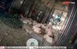 Ăn gà thải nhiễm kháng sinh hậu quả khôn lường: Chuyên gia dinh dưỡng chỉ cách phân biệt