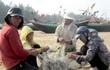 Tiền bồi thường Formosa: Hà Tĩnh đang gỡ, Huế bảo khó
