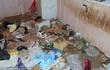 """Cảnh sát nín thở giải cứu 2 trẻ nhỏ và 30 con vật ra khỏi ngôi nhà """"bẩn nhất thế giới"""""""