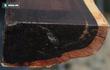 """Từ cây gỗ 1 triệu USD không bán ở Thanh Hóa: 10 loại gỗ """"đắt xắt ra miếng"""" bạn biết chưa?"""