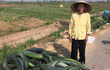Nhóm dancer Hà thành và điệu nhảy giàu ý nghĩa ủng hộ nông dân Phú Xuyên