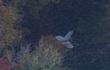 Bộ Quốc phòng thông tin chính thức vụ phi công Việt tử nạn ở Anh