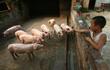 Người Trung Quốc ăn khoảng 144.000 tấn thịt heo mỗi ngày