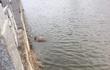 Con trai đi đám cưới nhưng không thấy về, gia đình đau đớn phát hiện thi thể dưới sông