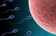 Những điều bạn cần biết về tinh trùng