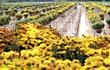 Lạc bước cảnh tiên ở những làng hoa nổi tiếng miền Nam