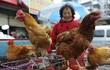 Trung Quốc ghi nhận thêm 2 ca nhiễm cúm A/H7N9