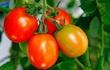 5 lưu ý tuyệt đối không làm khi ăn cà chua để tránh gây hại