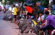 Việt Nam đối mặt 2 dịch cúm gia cầm gây chết người