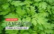 Những bài thuốc quý từ lá ngải cứu bạn nên biết để chữa bệnh mùa hè, phòng bệnh mùa đông
