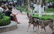 Chó thả rông ra đường không rọ mõm: Vì sao không xử phạt chủ?