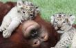 20 câu chuyện về tình cảm động vật, ai đọc xong cũng nghẹn ngào rơi nước mắt