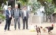 Gà Đông Tảo chết bất thường ở Hưng Yên: Cố tình thổi phồng sự việc?