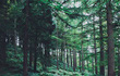 Các nhà khoa học phát hiện thêm 467 triệu ha rừng chưa từng được biết tới - gấp hơn 14 lần diện tích Việt Nam