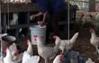 Khủng hoảng trứng gà: 1.000 đồng/quả, ế chất đống đầy nhà