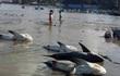 Bình Thuận nói về tin cá mập chết trắng biển Mũi Né