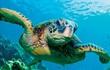 Một chú rùa biển có thể nặng ngang 1 chiếc xe hơi và sự thật bất ngờ về cuộc đời chúng