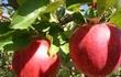 4 công dụng của quả táo có thể bạn chưa biết