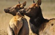 """Loài hươu này thực sự """"thành tinh"""" khi sống quá lâu, gây bất ngờ cho giới khoa học"""
