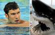 Màn so tài giữa kình ngư huyền thoại và cá mập trắng bị chỉ trích