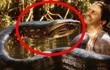"""Trăn Anaconda hung bạo là thế nhưng cũng phải """"khuất phục"""" trước 2 hung thần Amazon này"""