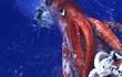 Câu chuyện về Kraken - con quái vật từ huyền thoại bước ra đời thực