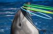 Không đánh đập, không ngược đãi - vậy cá heo được huấn luyện như thế nào nhỉ?