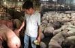 Vụ 3.750 con heo tiêm thuốc: Cảnh cáo Chi cục trưởng Chăn nuôi thú y TP.HCM