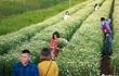 Giới trẻ Hà thành đua nhau tạo dáng với cúc họa mi đầu mùa